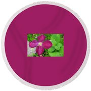 Purple Clematis In Bloom Round Beach Towel
