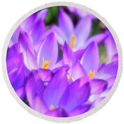 Purple Crocus Flowers Round Beach Towel