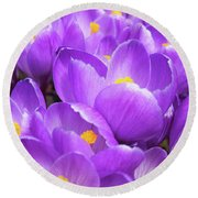 Purple Crocuses Round Beach Towel