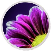 Purple Daisy Being Shy Round Beach Towel