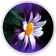 Round Beach Towel featuring the photograph Purple Daisy Flower by Susanne Van Hulst