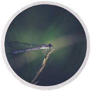 Round Beach Towel featuring the photograph Purple Damsel by Shane Holsclaw