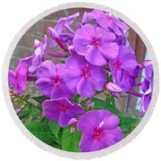 Purple Flame Phlox Round Beach Towel