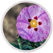 Purple Rockrose Round Beach Towel