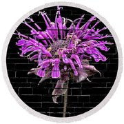 Purple Flower Under Bricks Round Beach Towel
