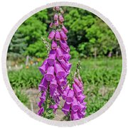 Purple Foxglove Digitalis Purpurea L Round Beach Towel