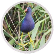Round Beach Towel featuring the photograph Purple Gallinule by Robert Frederick