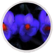 Beautiful Blue Purple Spring Crocus Blooms Round Beach Towel by Shelley Neff