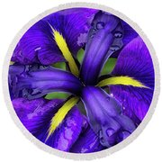 Purple Iris Centre Round Beach Towel