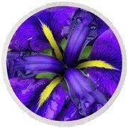 Purple Iris Centre Round Beach Towel