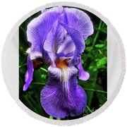 Purple Iris Round Beach Towel