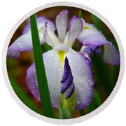 Purple Iris In Morning Dew Round Beach Towel