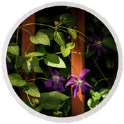 Round Beach Towel featuring the photograph Purple Jackmanii Clematis by Onyonet  Photo Studios