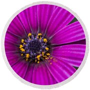 Purple Passion Round Beach Towel