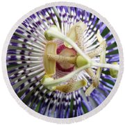 Purple Passion Flower Round Beach Towel by Belinda Lee
