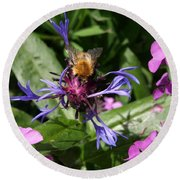 Purple Pollination Round Beach Towel