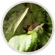 Purple-rumped Sunbird Round Beach Towel