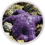 Purple Star Fish Round Beach Towel