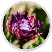 Round Beach Towel featuring the photograph Purple Striped Tulip by Angela DeFrias
