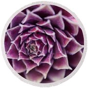 Purple Succulent Plant Blossom In Summer Round Beach Towel