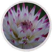 Purple Tipped Starburst Dahlia Round Beach Towel