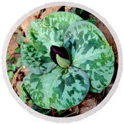 Purple Toadshade Trillium Round Beach Towel