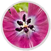 Round Beach Towel featuring the photograph Purple Tulip by Nina Ficur Feenan