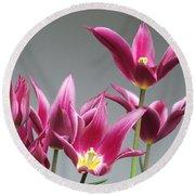Purple Tulips Round Beach Towel by Helen Northcott