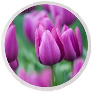 Purple Tulips Of Keukenhof Round Beach Towel by Jenny Rainbow