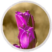 Purple Tulips Sepia Background Round Beach Towel