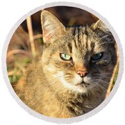 Purr-fect Kitty Cat Friend Round Beach Towel