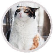 Round Beach Towel featuring the photograph Puzzled by Laura Melis