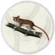 Pygmy Mouse Lemur Round Beach Towel