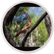 Pyrrhuloxia At Work Round Beach Towel