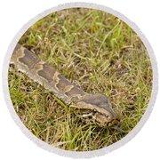 Python In Grass, Kenya Round Beach Towel
