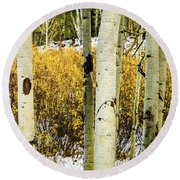 Quakies And Willows In Autumn Round Beach Towel