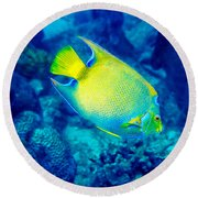 Round Beach Towel featuring the photograph Queen Angelfish I by Perla Copernik