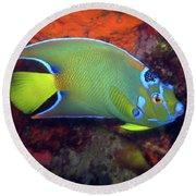 Queen Angelfish, U. S. Virgin Islands 2 Round Beach Towel