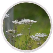 Queen Anne Lace Wildflowers Round Beach Towel