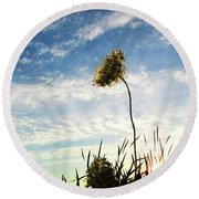 Queen Anne's Lace At Sunset Round Beach Towel