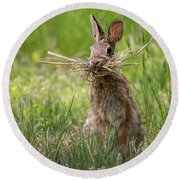 Rabbit Collector Square Round Beach Towel by Terry DeLuco