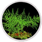 Rabbit Foot Fern Round Beach Towel