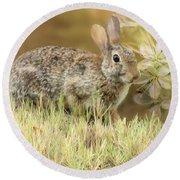 Eastern Cottontail Rabbit In Grass Round Beach Towel by Janette Boyd