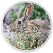Rabbit Munching Lunch Round Beach Towel