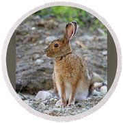 Rabbit Rabbit Round Beach Towel