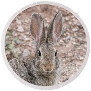 Rabbit Stare Round Beach Towel