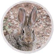 Rabbit Stare Round Beach Towel