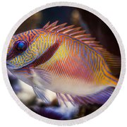 Rabbitfish Round Beach Towel
