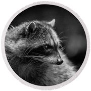 Raccoon 3 Round Beach Towel