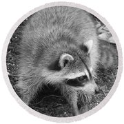 Raccoon - Black And White Round Beach Towel by Carol Groenen